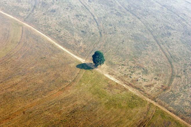 24 bức ảnh cho thấy rừng Amazon từ lá phổi xanh của thế giới đã trở thành chứng tích cho sự tàn phá của con người - Ảnh 16.