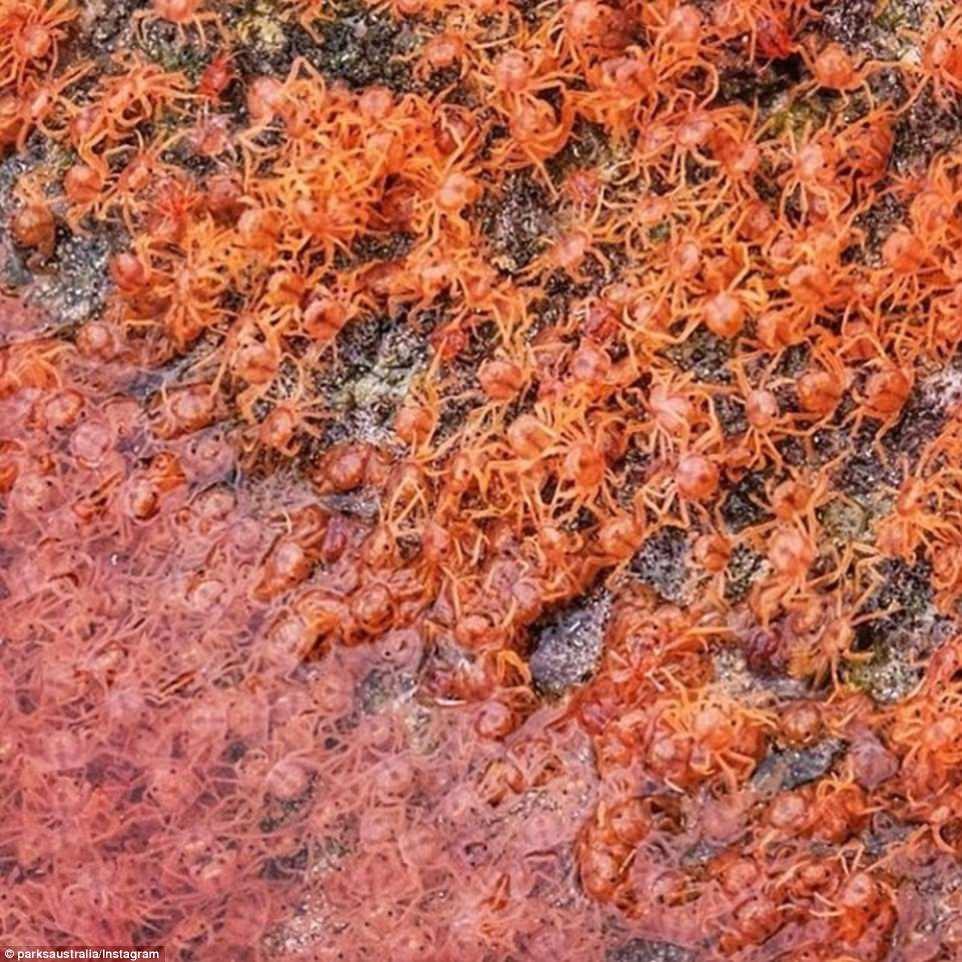 Cả bờ biển nhuốm màu đỏ rực, du khách đến gần ngỡ ngàng nhận ra cảnh tượng thiên nhiên cực kỳ ấn tượng - Ảnh 9.