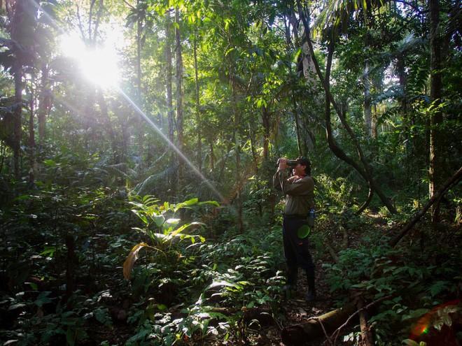 24 bức ảnh cho thấy rừng Amazon từ lá phổi xanh của thế giới đã trở thành chứng tích cho sự tàn phá của con người - Ảnh 24.