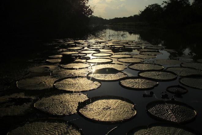 24 bức ảnh cho thấy rừng Amazon từ lá phổi xanh của thế giới đã trở thành chứng tích cho sự tàn phá của con người - Ảnh 4.