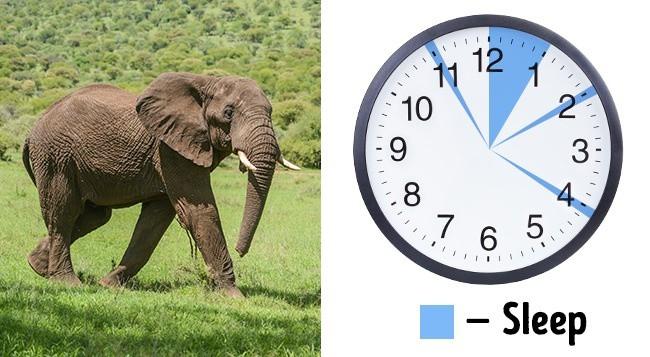 5 công thức để bạn ngủ ít mà vẫn luôn đủ giấc, tràn đầy năng lượng - Ảnh 5.