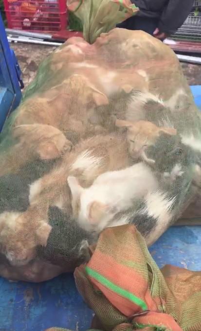 Người phụ nữ chi gần 20 triệu đồng cứu 130 chú mèo ra khỏi lò mổ ở Sài Gòn - Ảnh 3.