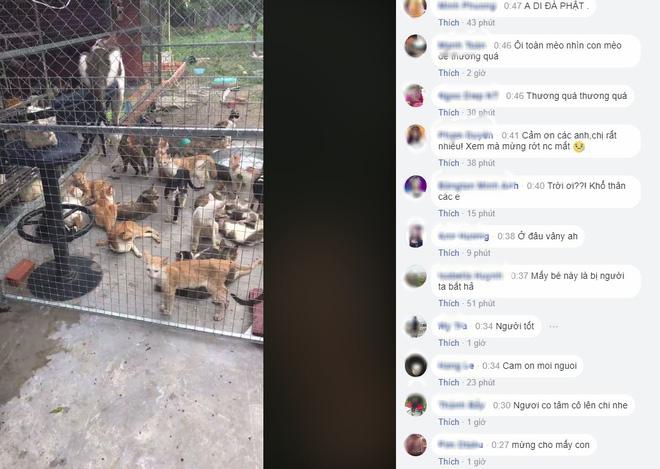 Người phụ nữ chi gần 20 triệu đồng cứu 130 chú mèo ra khỏi lò mổ ở Sài Gòn - Ảnh 7.