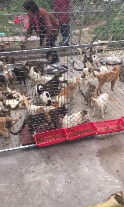 Người phụ nữ chi gần 20 triệu đồng cứu 130 chú mèo ra khỏi lò mổ ở Sài Gòn - Ảnh 4.