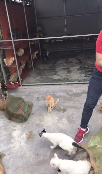 Người phụ nữ chi gần 20 triệu đồng cứu 130 chú mèo ra khỏi lò mổ ở Sài Gòn - Ảnh 5.