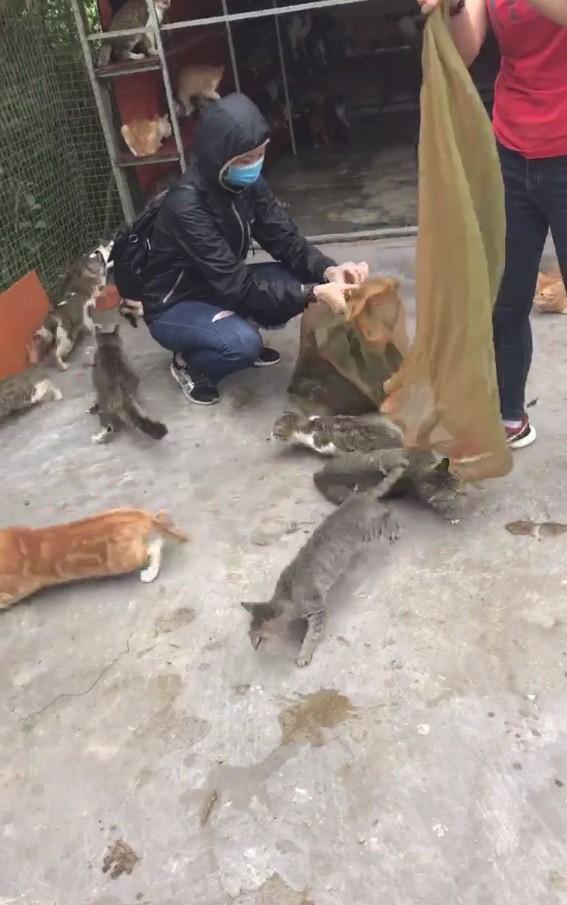 Người phụ nữ chi gần 20 triệu đồng cứu 130 chú mèo ra khỏi lò mổ ở Sài Gòn - Ảnh 6.