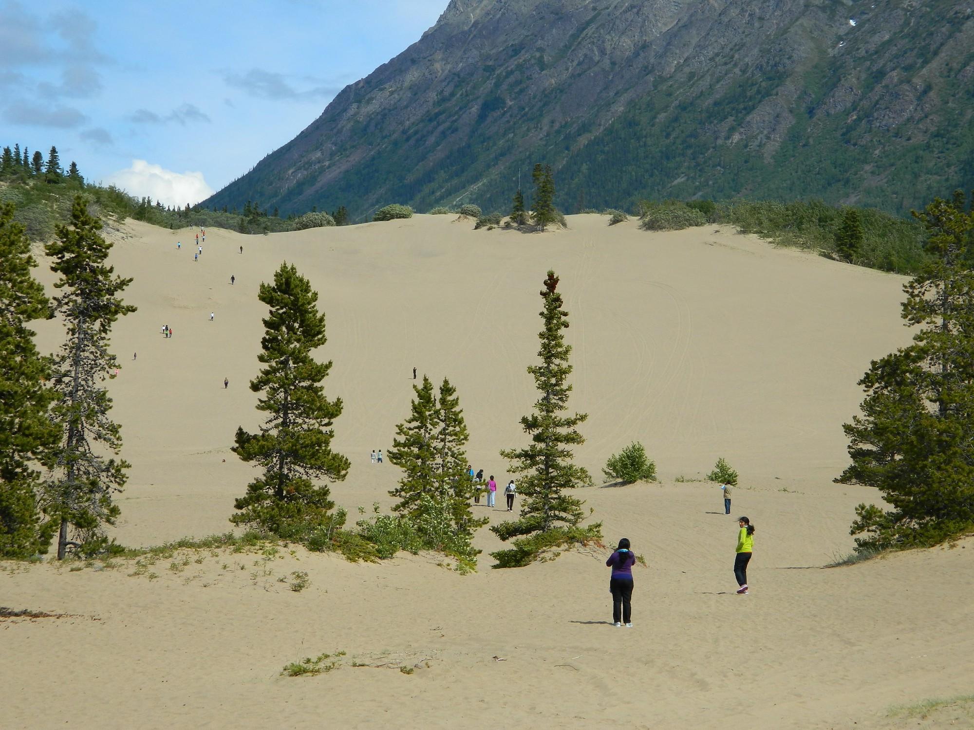 Kỳ lạ sa mạc nhỏ bé nhất thế giới: trông như một cồn cát nhưng vẫn đầy đủ đặc tính của một sa mạc hoàn hảo - Ảnh 3.