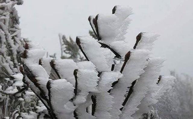 Miền Bắc sẽ chịu thêm 3-5 đợt rét đậm, rét hại trong tháng 1/2019 - Ảnh 1.