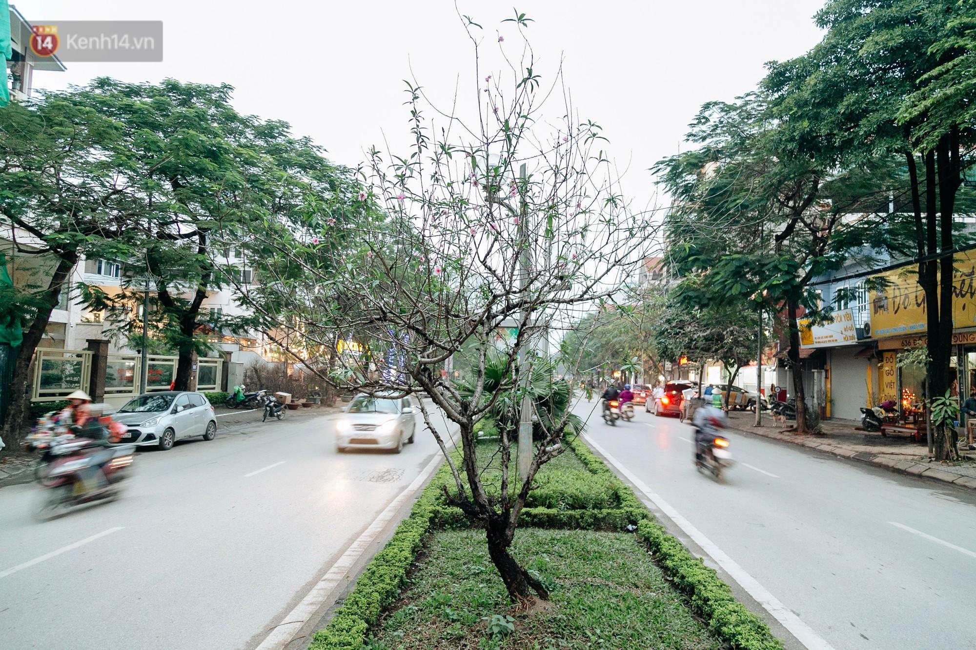 Chùm ảnh: Hoa đào đã nở đỏ rực trên những tuyến phố Hà Nội, Tết đã đến rất gần rồi! - Ảnh 1.