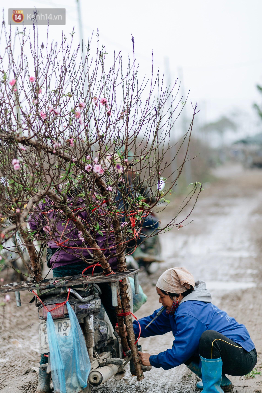 Chùm ảnh: Hoa đào đã nở đỏ rực trên những tuyến phố Hà Nội, Tết đã đến rất gần rồi! - Ảnh 10.
