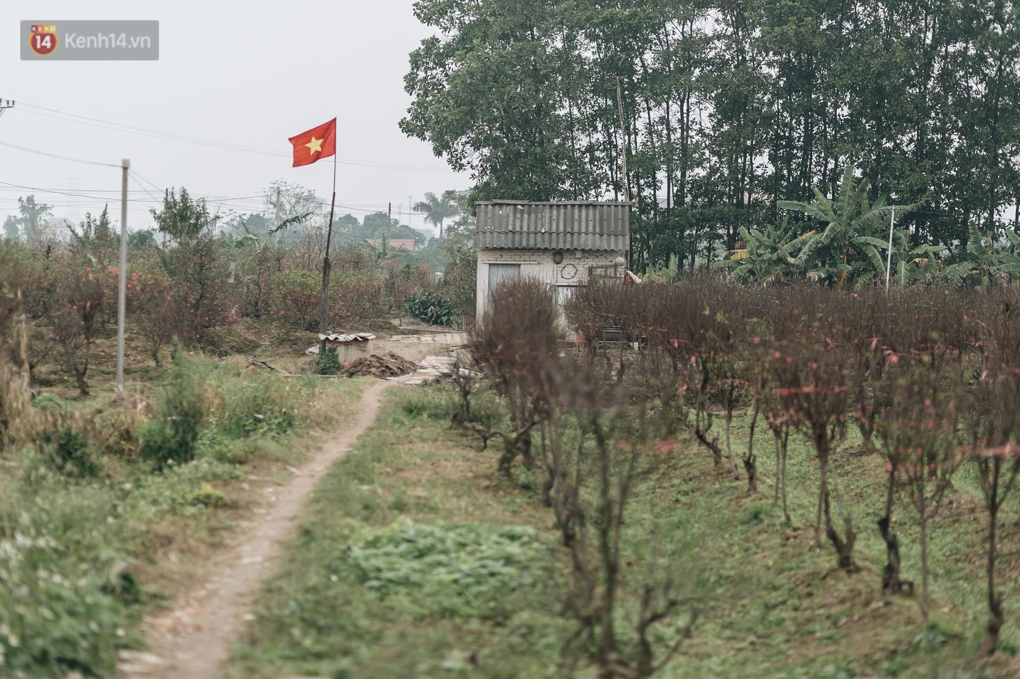 Gần 200 gốc đào của người dân Bắc Ninh bị chặt phá trong đêm: Tết năm nay còn chả có bánh chưng mà ăn - Ảnh 18.