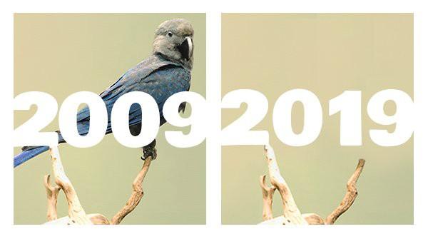 Khi Trái đất cũng theo trend Thử thách 10 năm, cảm xúc chỉ còn 2 chữ: Xót xa - Ảnh 10.