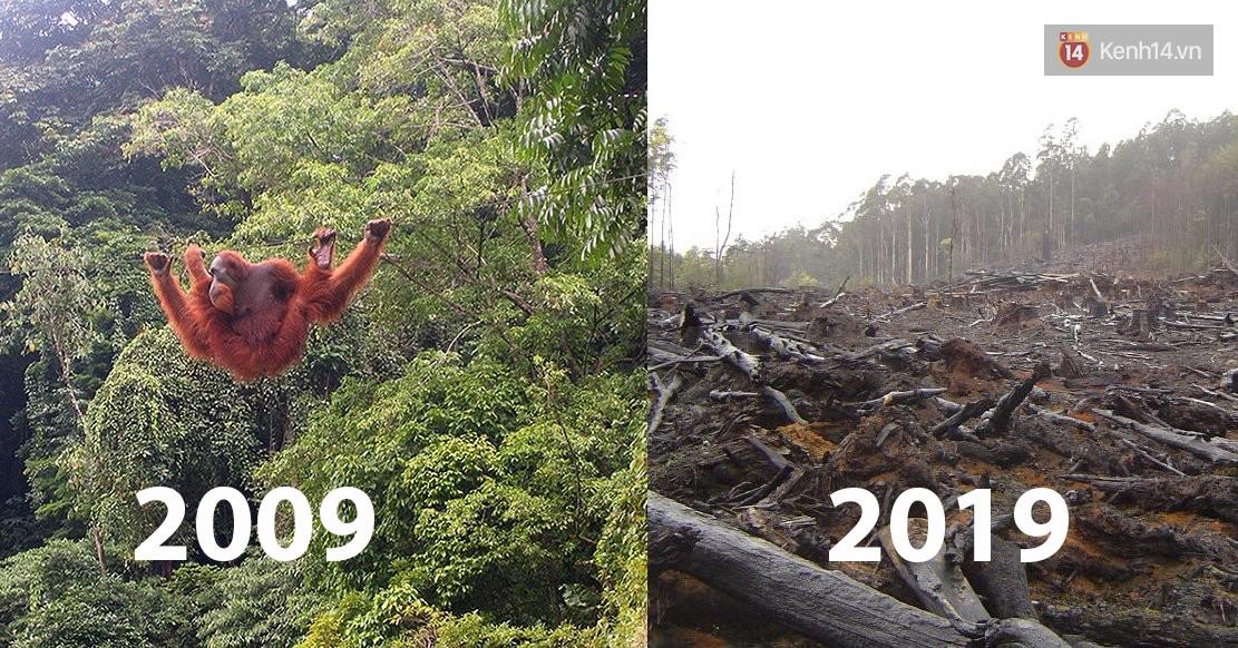 Khi Trái đất cũng theo trend Thử thách 10 năm, cảm xúc chỉ còn 2 chữ: Xót xa - Ảnh 1.