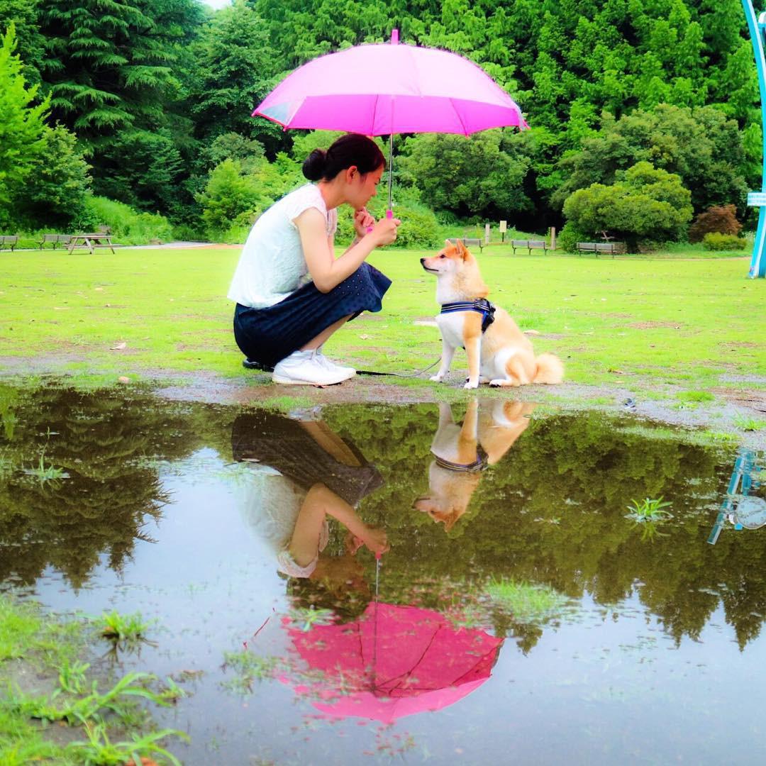 Không chỉ khôn ngoan và dễ thương, chú chó shiba biết dỗ trẻ đang khiến Internet tan chảy vì ngọt ngào quá! - Ảnh 1.