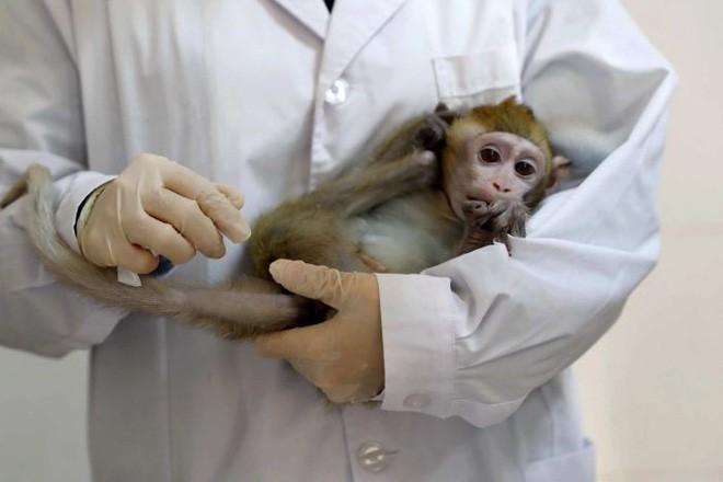 Các nhà khoa học Trung Quốc lại vừa nhân bản thành công 5 con khỉ biến đổi gen đầu tiên trên thế giới - Ảnh 3.