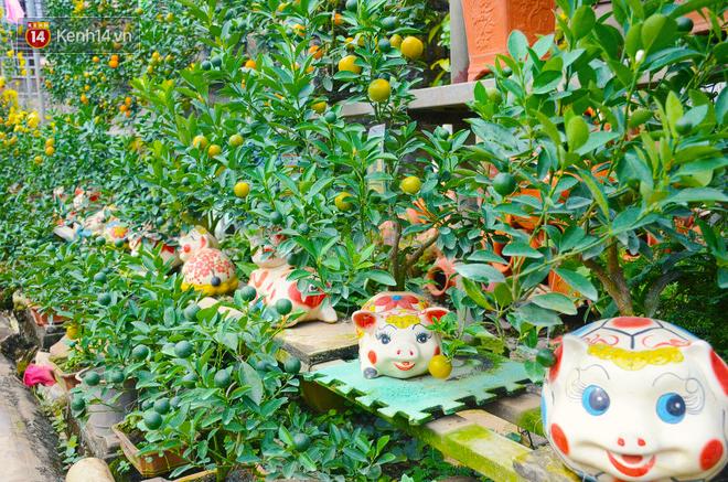 Ngộ nghĩnh những cây quất cảnh mọc trên lưng các chú con heo đất có giá hàng triệu đồng ở Hà Nội - Ảnh 1.