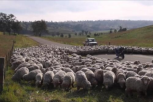 Các quy định tham gia giao thông kỳ lạ trên thế giới - Ảnh 5.