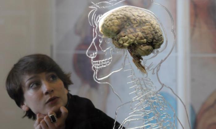 Bên trong hộp sọ của mỗi chúng ta cũng có tóc mọc lên và lý do chúng tồn tại thực sự rất quan trọng - Ảnh 2.