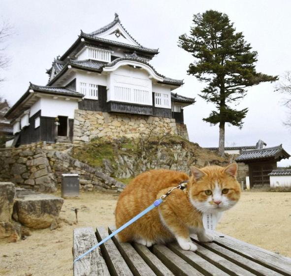 Chú mèo đi lạc được phong làm chúa tể lâu đài cổ ở Nhật Bản, thu hút du khách nườm nượp đến thăm - Ảnh 2.