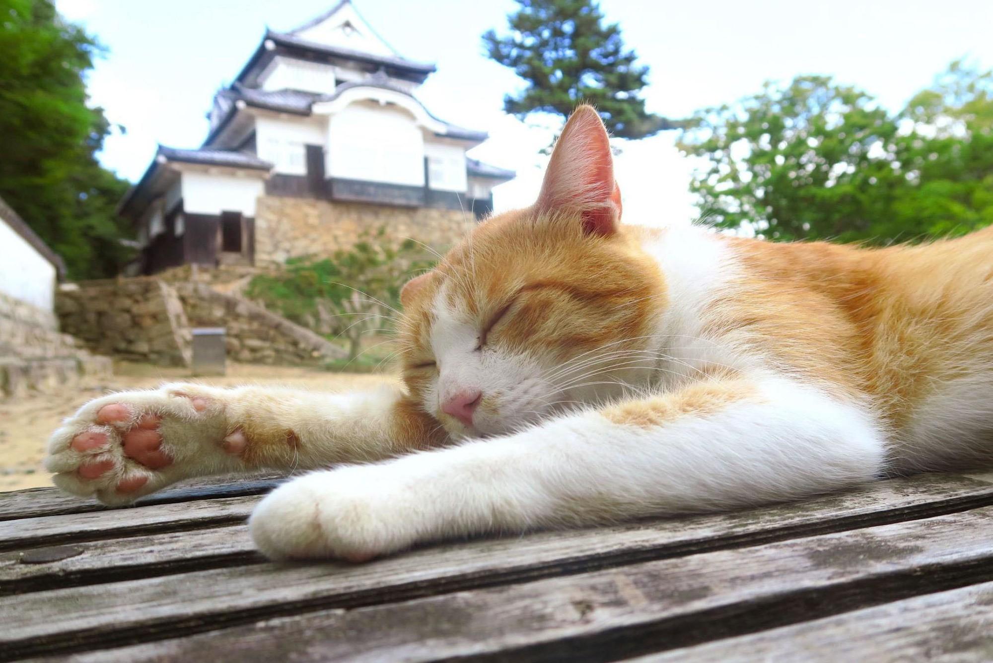 Chú mèo đi lạc được phong làm chúa tể lâu đài cổ ở Nhật Bản, thu hút du khách nườm nượp đến thăm - Ảnh 3.