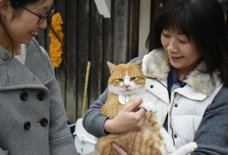 Chú mèo đi lạc được phong làm chúa tể lâu đài cổ ở Nhật Bản, thu hút du khách nườm nượp đến thăm - Ảnh 5.