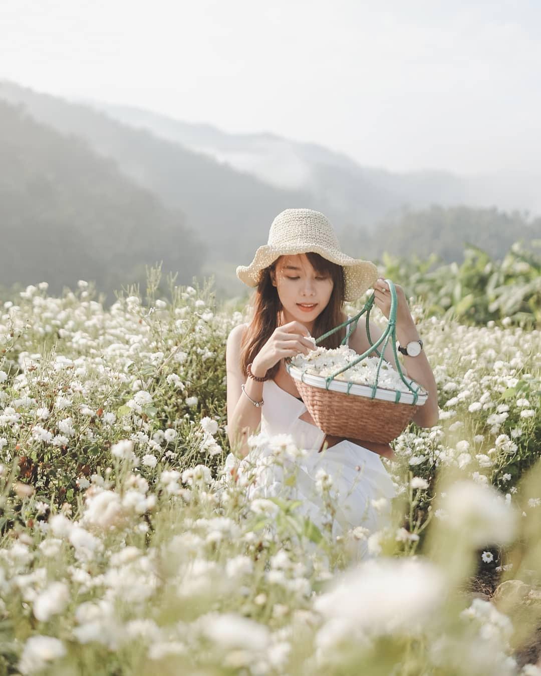 """Check in gấp ở 4 vườn hoa đẹp nhất Chiang Mai để biết vì sao nơi đây được mệnh danh là """"đóa hồng phương Bắc"""" của đất Thái - Ảnh 7."""