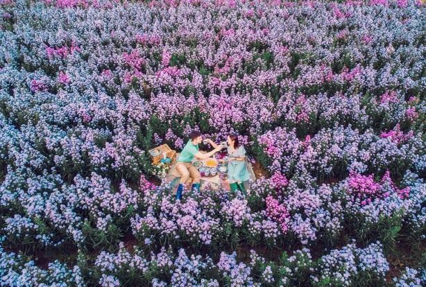 """Check in gấp ở 4 vườn hoa đẹp nhất Chiang Mai để biết vì sao nơi đây được mệnh danh là """"đóa hồng phương Bắc"""" của đất Thái - Ảnh 1."""