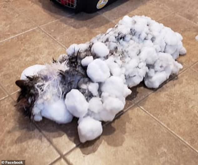 Câu chuyện ấm áp: Cô mèo được rã đông sau khi đóng băng vì đợt lạnh thấu xương ở Mỹ - Ảnh 1.
