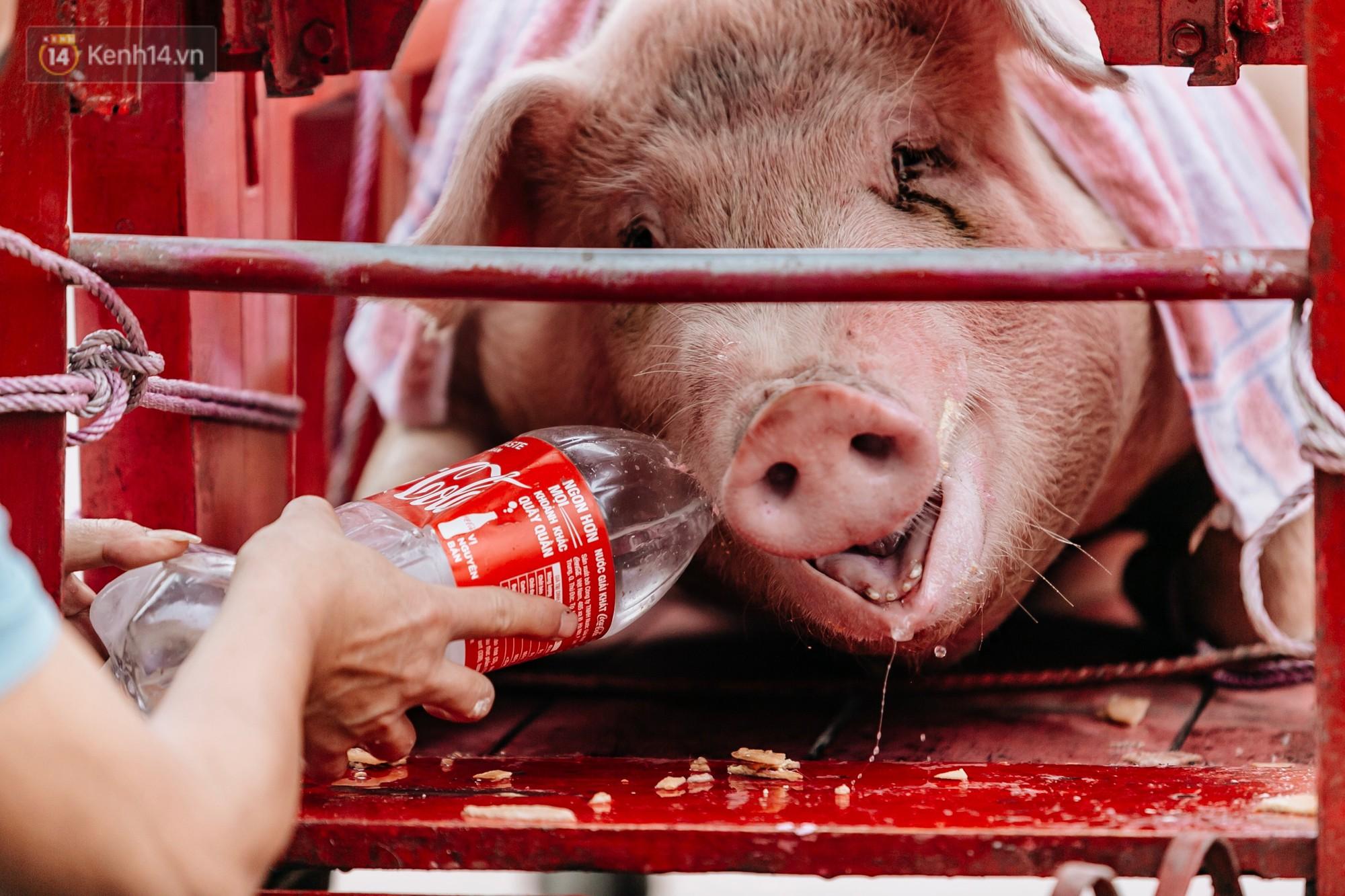 Ảnh, clip: Hàng trăm người dân tập trung chứng kiến nghi lễ chém lợn kín ngày đầu năm, máu 2 ông Ỉn chảy lênh láng - Ảnh 3.