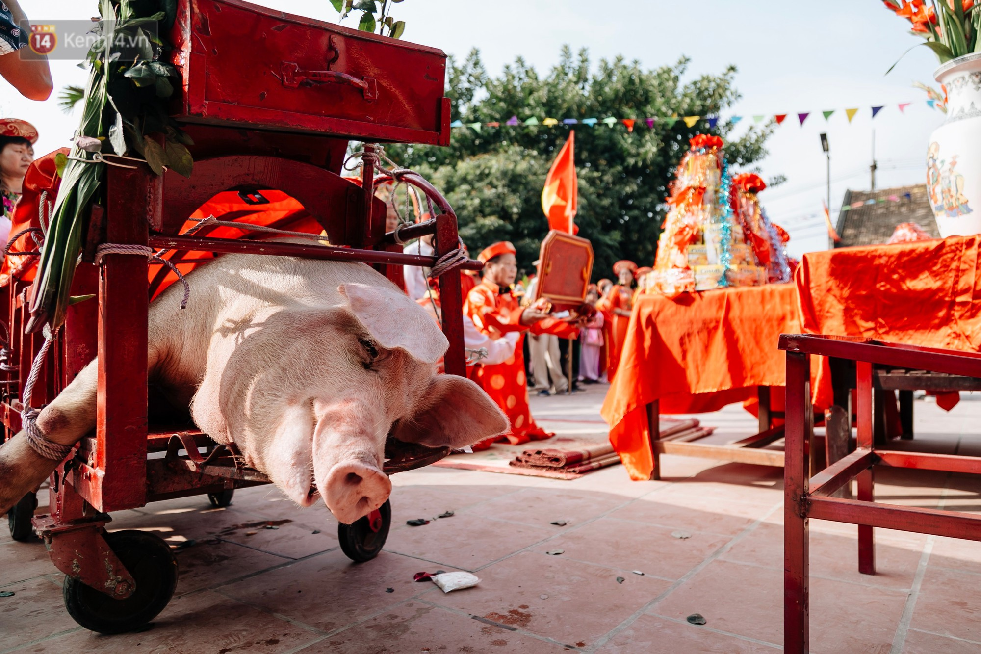 Ảnh, clip: Hàng trăm người dân tập trung chứng kiến nghi lễ chém lợn kín ngày đầu năm, máu 2 ông Ỉn chảy lênh láng - Ảnh 5.