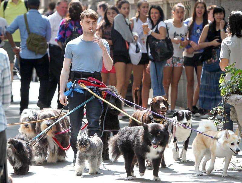 Loạt ảnh sao Harry Potter được vây quanh bởi bầy boss bỗng gây sốt mạng xã hội vì quá ngầu và dễ thương! - Ảnh 1.