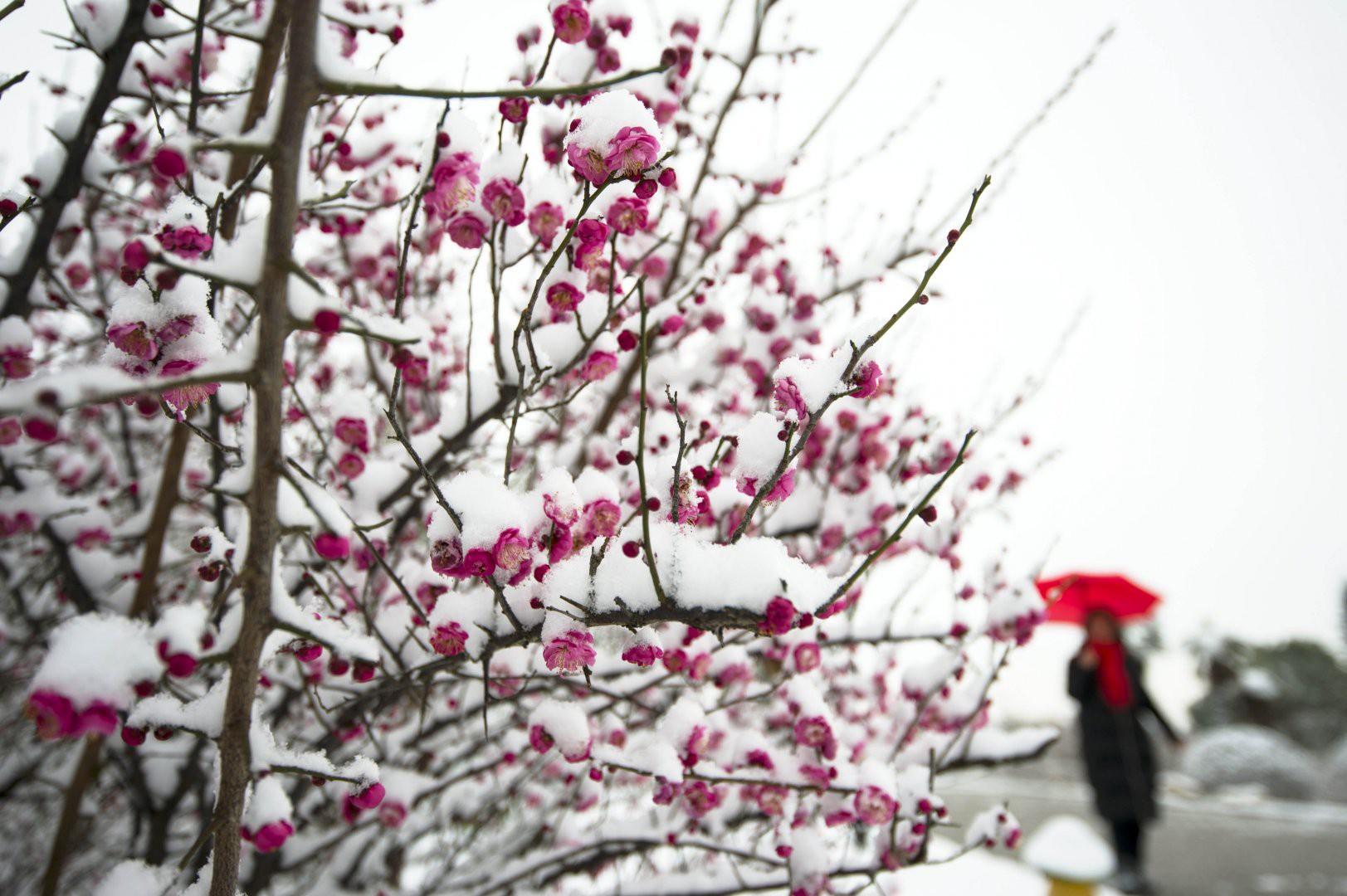 Vẻ đẹp trong trẻo của tuyết mùa xuân ở Trung Quốc khiến nhiều tín đồ du lịch cuồng chân dù đã hết Tết - Ảnh 7.