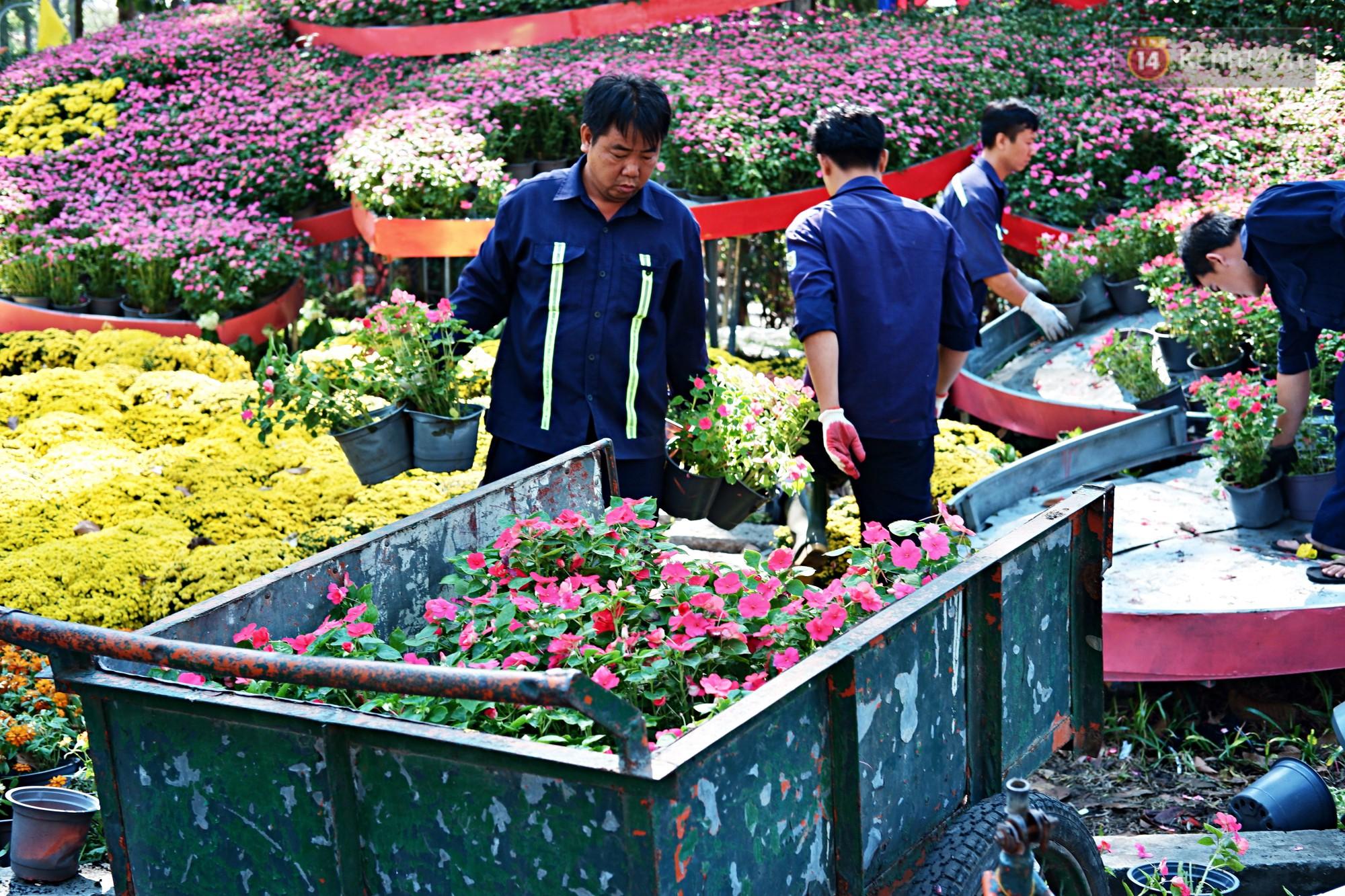 Hội hoa Xuân kết thúc, người dân Sài Gòn hào hứng xin hoa miễn phí về chưng cho đỡ uổng phí - Ảnh 7.