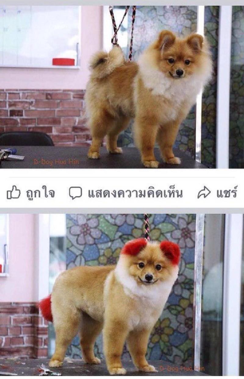 Ăn theo trào lưu nhuộm tai chó màu hồng, cô chủ Thái Lan bị chỉ trích vì khiến thú cưng dị ứng đến rụng cả tai - Ảnh 1.
