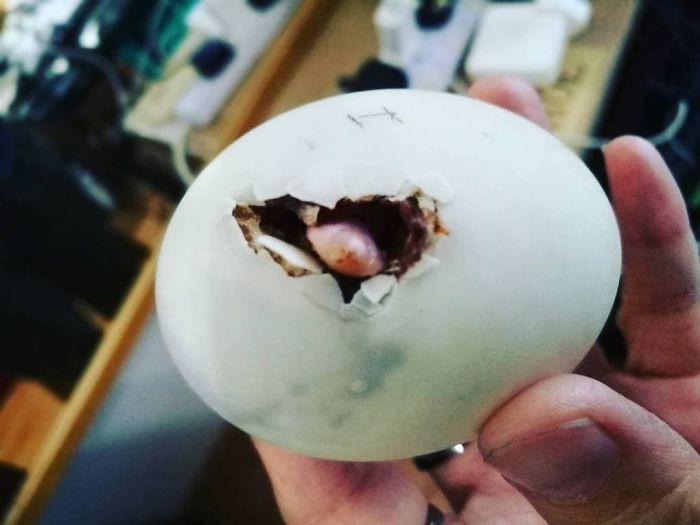 Mua được quả trứng vịt lộn, cô gái cô đơn không luộc lên ăn mà quyết hóa kiếp biến nó thành tri kỉ - Ảnh 1.