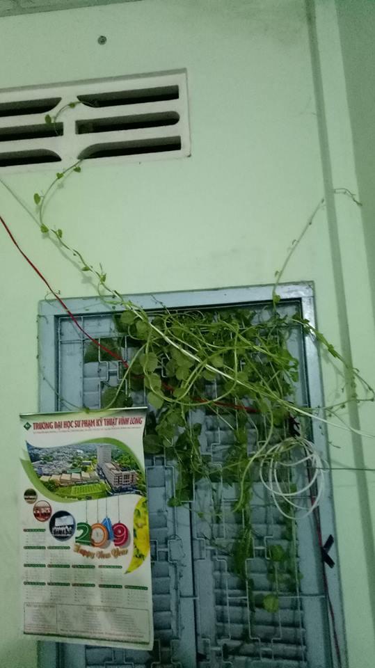 Chỉ 10 ngày nghỉ Tết, sinh viên phát hoảng khi thấy cây cối sinh sôi nẩy nở khắp phòng trọ - Ảnh 1.