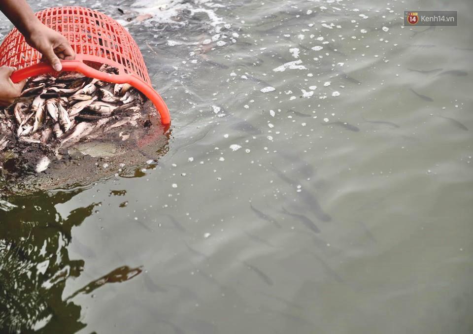 Hà Nội: Gần 10 tấn cá được hàng nghìn phật tử chuyền tay nhau trong lễ phóng sinh đầu năm - Ảnh 6.