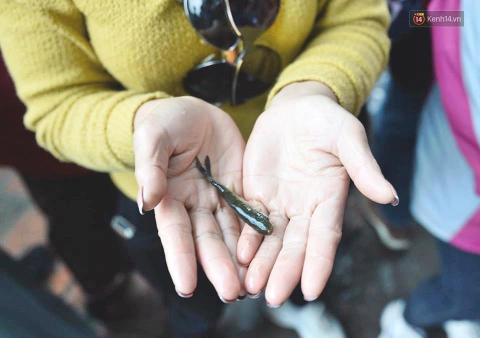 Hà Nội: Gần 10 tấn cá được hàng nghìn phật tử chuyền tay nhau trong lễ phóng sinh đầu năm - Ảnh 9.