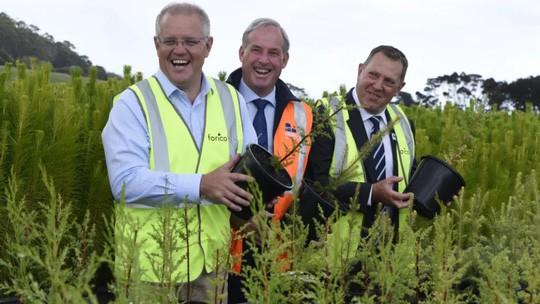 Tham vọng trồng 1 tỉ cây của Úc - Ảnh 1.