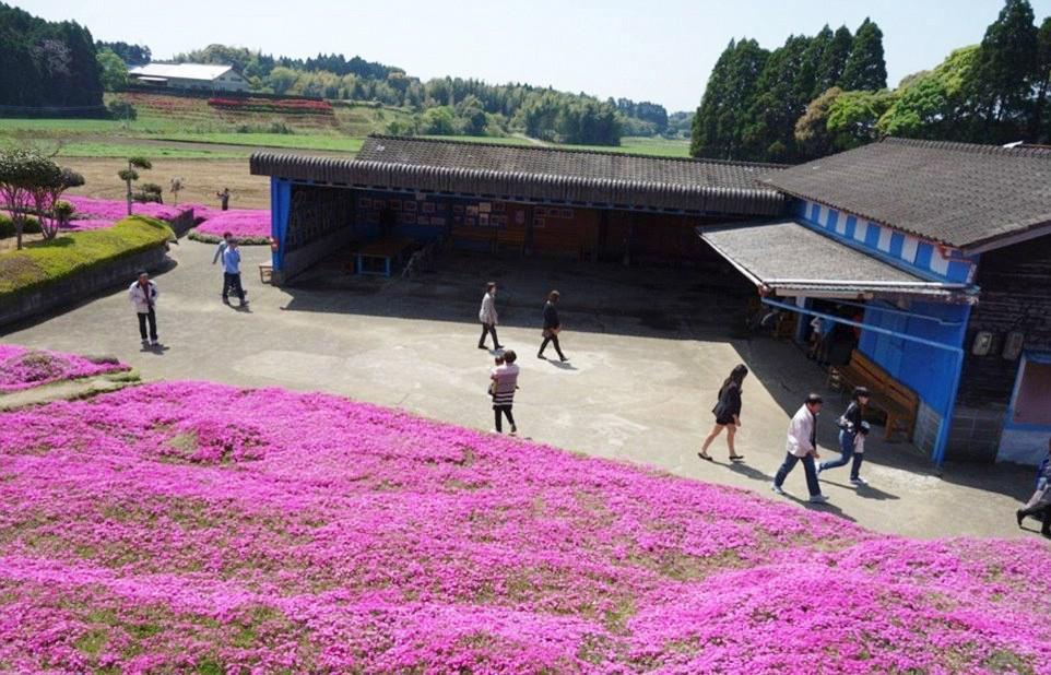 Người đàn ông Nhật Bản dành trọn tình yêu trồng đồi hoa trước nhà suốt 4 năm để tặng vợ mù lòa - Ảnh 2.