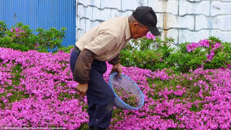 Người đàn ông Nhật Bản dành trọn tình yêu trồng đồi hoa trước nhà suốt 4 năm để tặng vợ mù lòa - Ảnh 12.