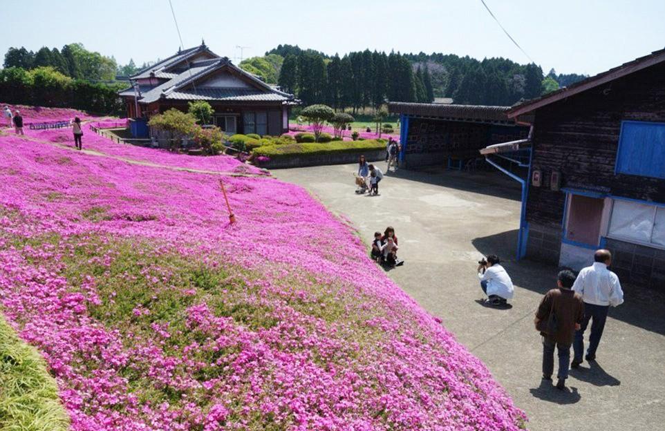Người đàn ông Nhật Bản dành trọn tình yêu trồng đồi hoa trước nhà suốt 4 năm để tặng vợ mù lòa - Ảnh 14.