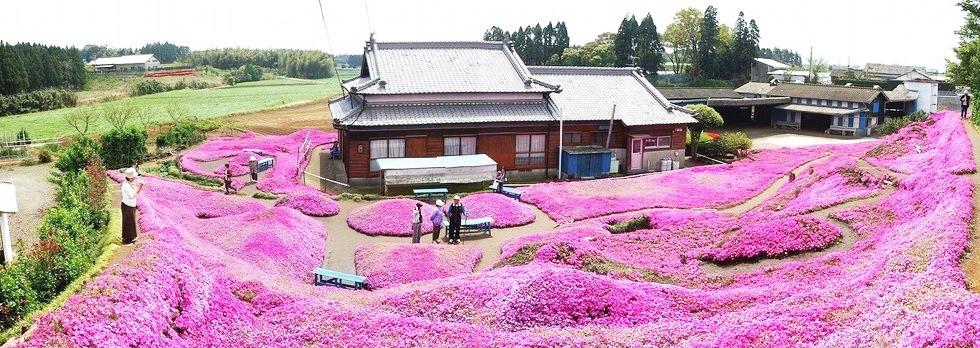 Người đàn ông Nhật Bản dành trọn tình yêu trồng đồi hoa trước nhà suốt 4 năm để tặng vợ mù lòa - Ảnh 22.