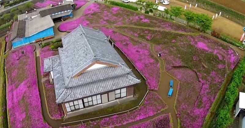 Người đàn ông Nhật Bản dành trọn tình yêu trồng đồi hoa trước nhà suốt 4 năm để tặng vợ mù lòa - Ảnh 6.