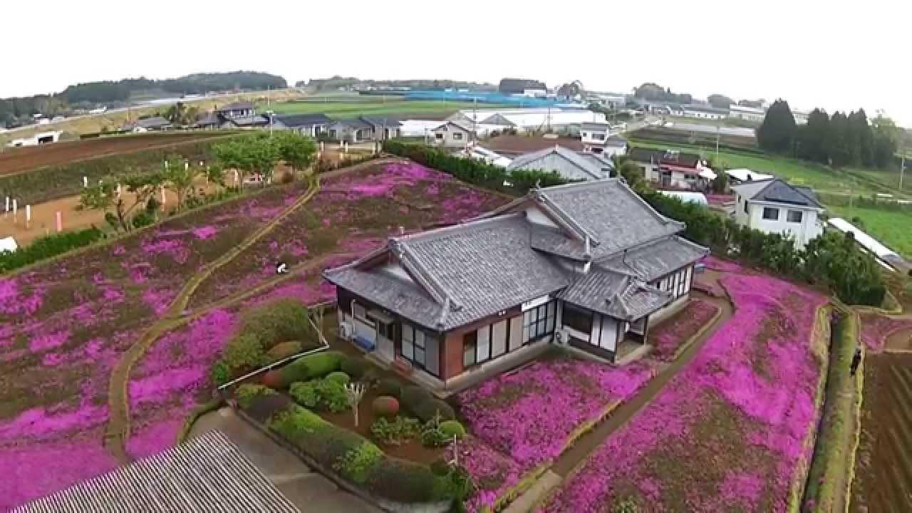 Người đàn ông Nhật Bản dành trọn tình yêu trồng đồi hoa trước nhà suốt 4 năm để tặng vợ mù lòa - Ảnh 7.