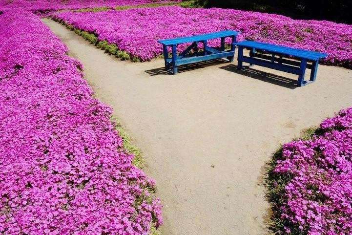 Người đàn ông Nhật Bản dành trọn tình yêu trồng đồi hoa trước nhà suốt 4 năm để tặng vợ mù lòa - Ảnh 8.