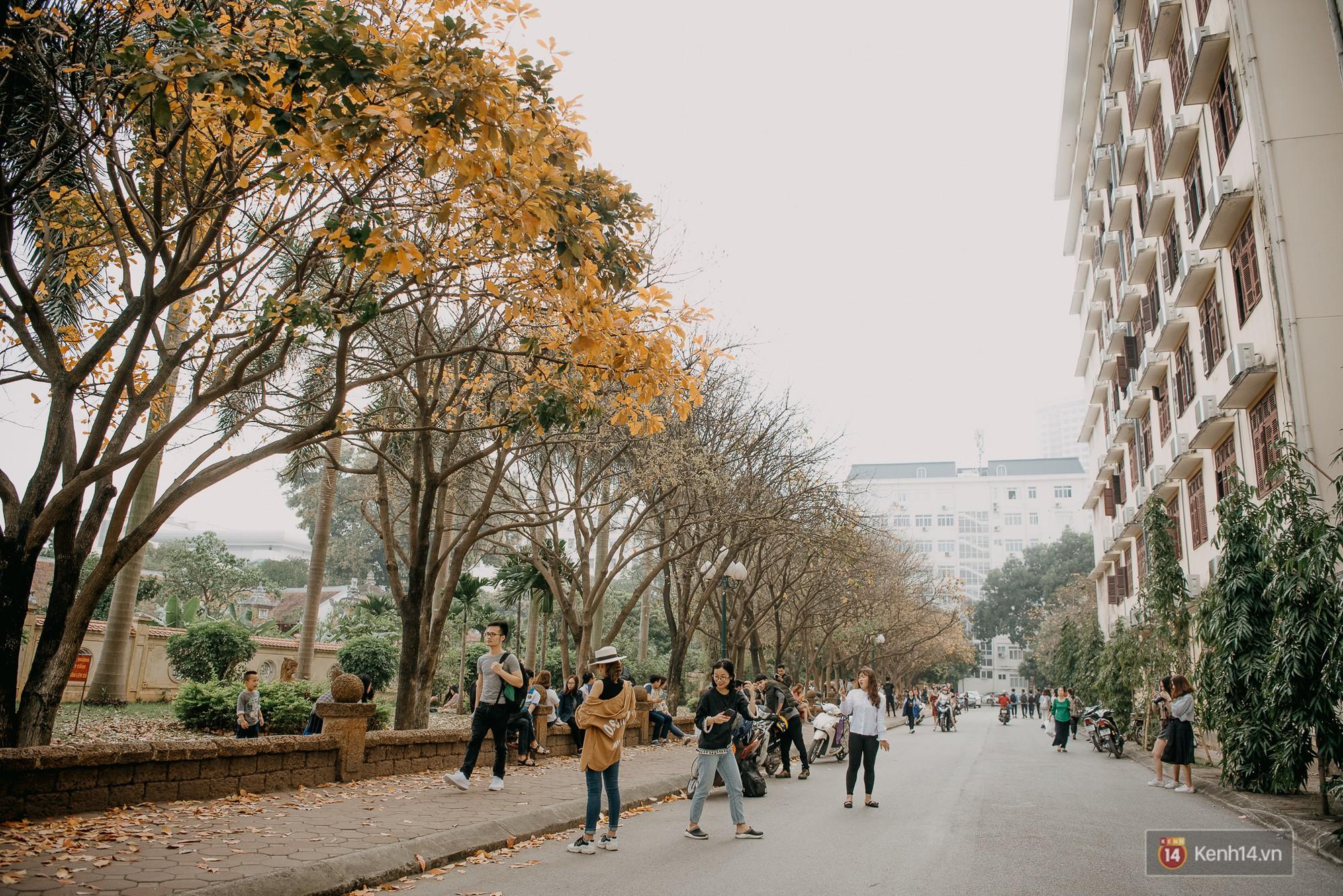 Sự thật phũ phàng tại con đường tình yêu đẹp nhất Hà Nội: Lá vàng rụng hết, người chật như nêm tranh chụp ảnh sống ảo - Ảnh 6.