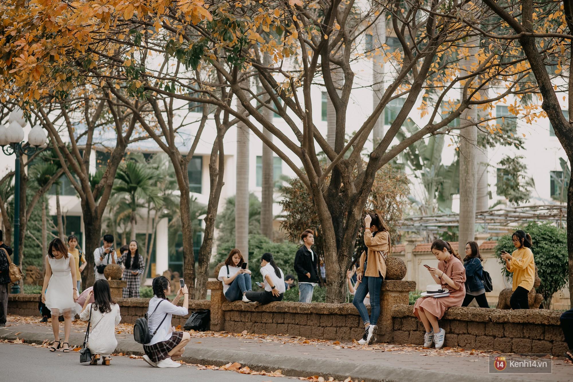 Sự thật phũ phàng tại con đường tình yêu đẹp nhất Hà Nội: Lá vàng rụng hết, người chật như nêm tranh chụp ảnh sống ảo - Ảnh 10.
