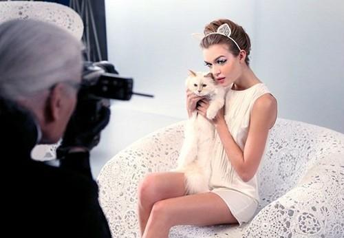Cuộc sống vương giả của mèo Choupette - tình yêu lớn nhất đời Karl Lagerfeld - Ảnh 11.