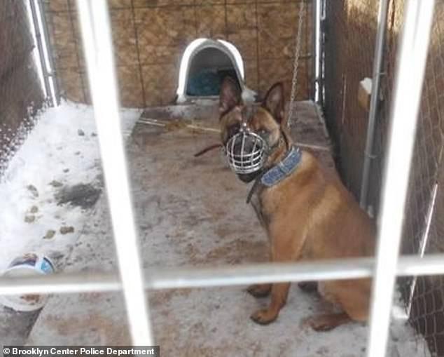 Chú chó bị chủ bỏ mặc ngoài trời rét -22 độ C trong những ngày lạnh kinh hoàng tại Mỹ - Ảnh 1.